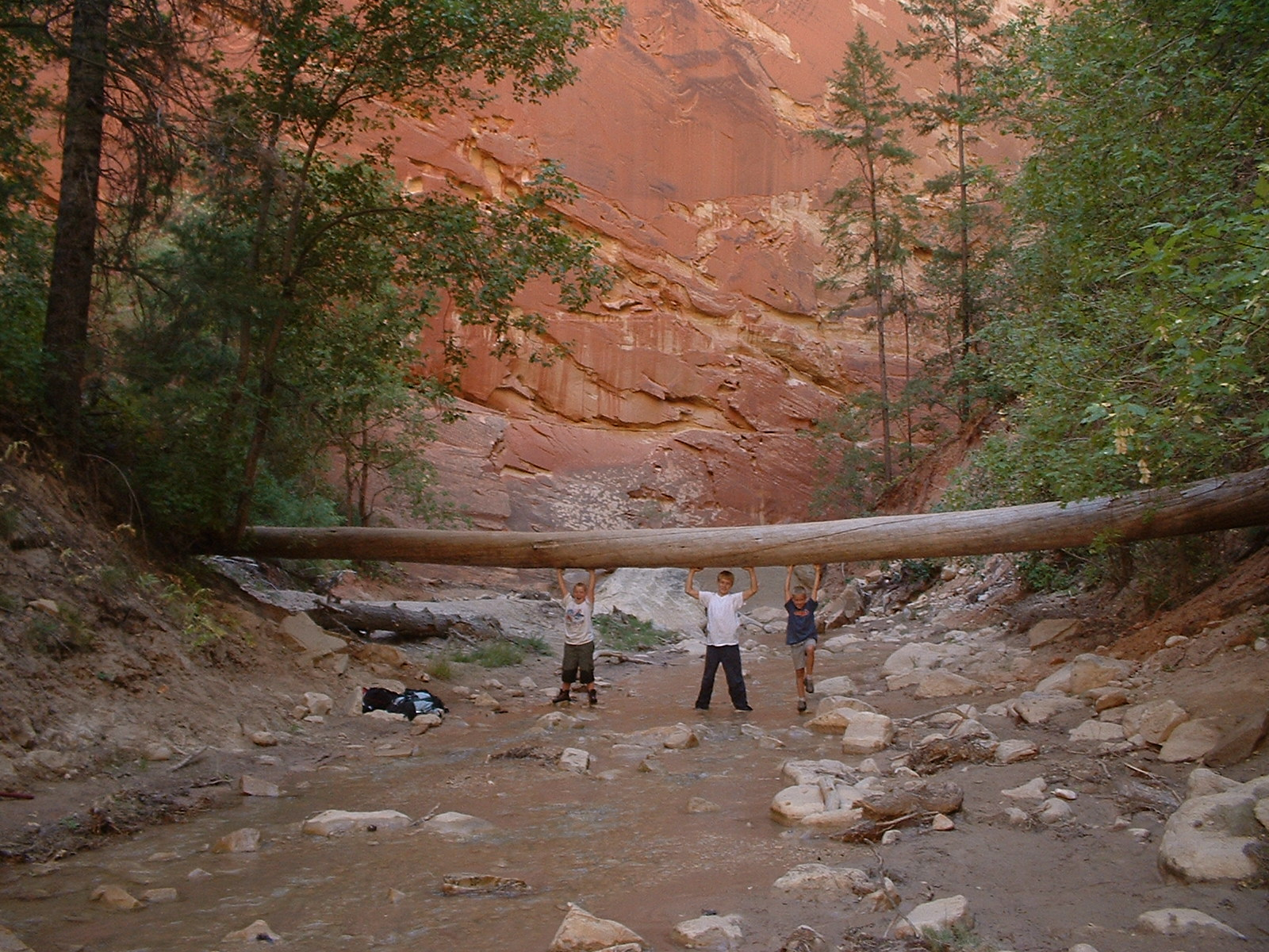 Zion's Narrows : tired tree